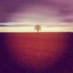 Gepimpte foto van een boom in Zuid-Limburg